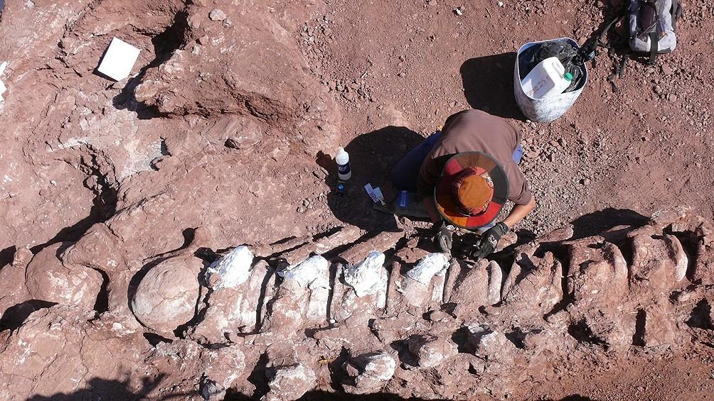 Encontraron restos fósiles de un dinosaurio que podría ser el más grande de la historia
