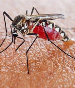 La OMS oficializó que la Argentina es un país libre de malaria