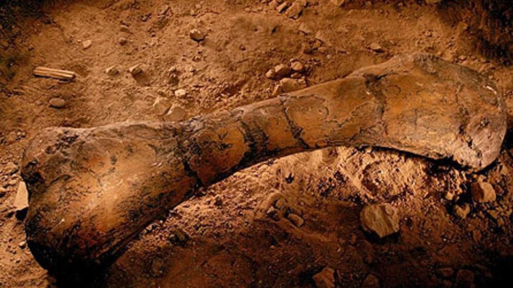 Descubren en La Rioja fósiles de dinosaurios de más de 70 millones de años de antigüedad