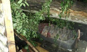 Temporal trágico: árbol aplastó a padre e hijo que dormían en su casa